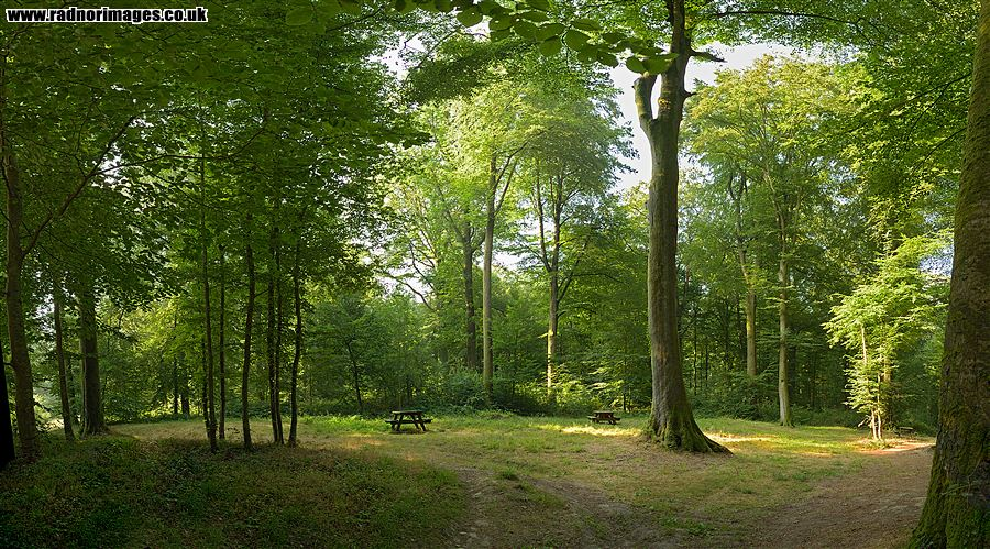 Foret Domaniale d'Hesdin