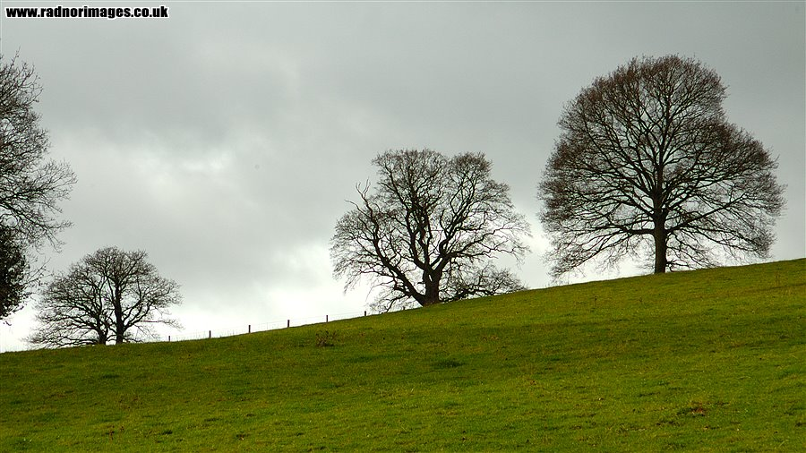Trees on Horizon
