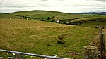 Bridle Way Sarnau to Epynt